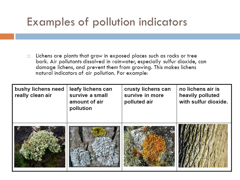 Examples of pollution indicators  Lichens are plants that grow in exposed places such as rocks or tree bark. Air pollutants dissolved in rainwater, e