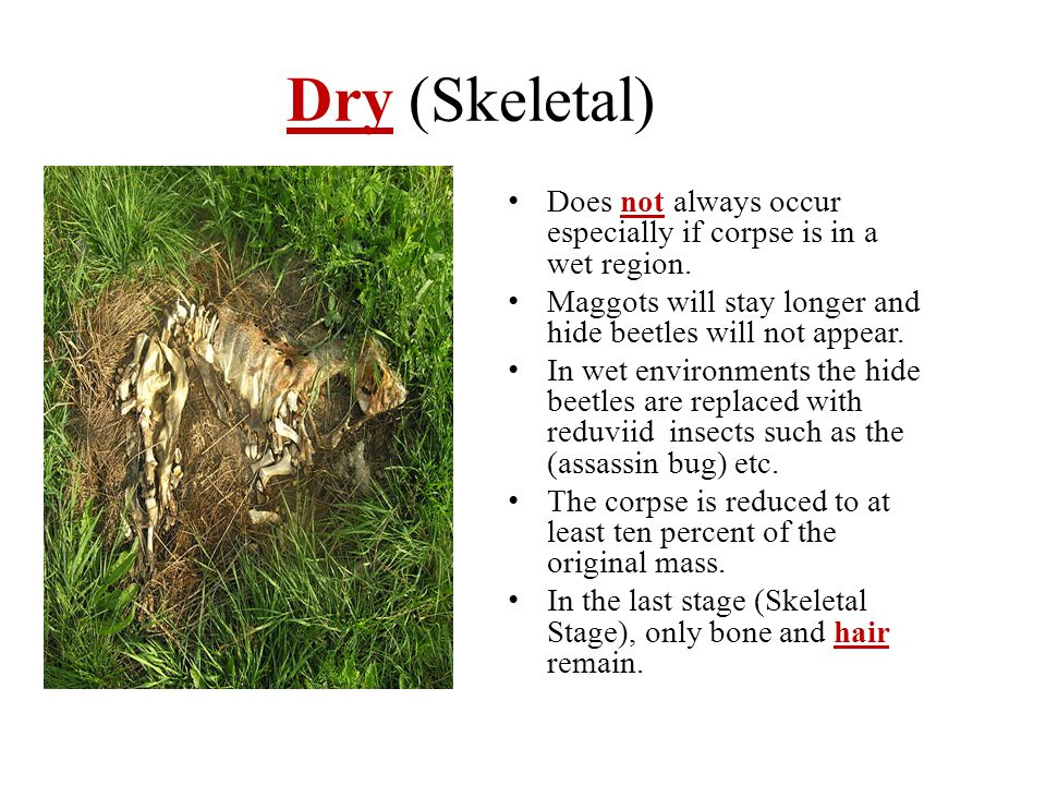 Dry (Skeletal) Does not always occur especially if corpse is in a wet region. Maggots will stay longer and hide beetles will not appear. In wet enviro