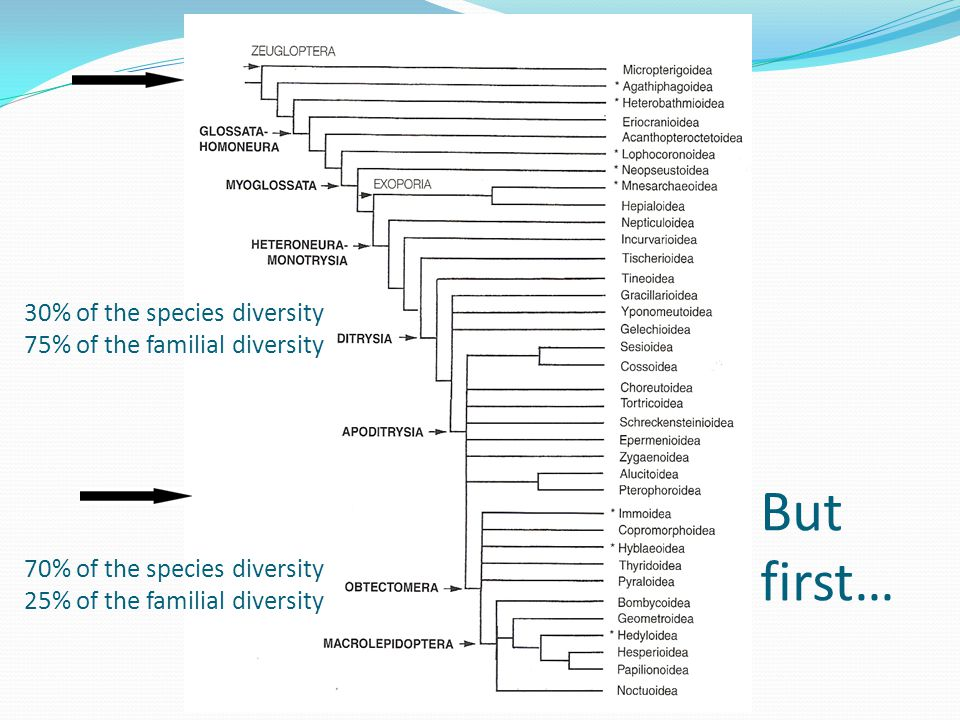 70% of the species diversity 25% of the familial diversity 30% of the species diversity 75% of the familial diversity