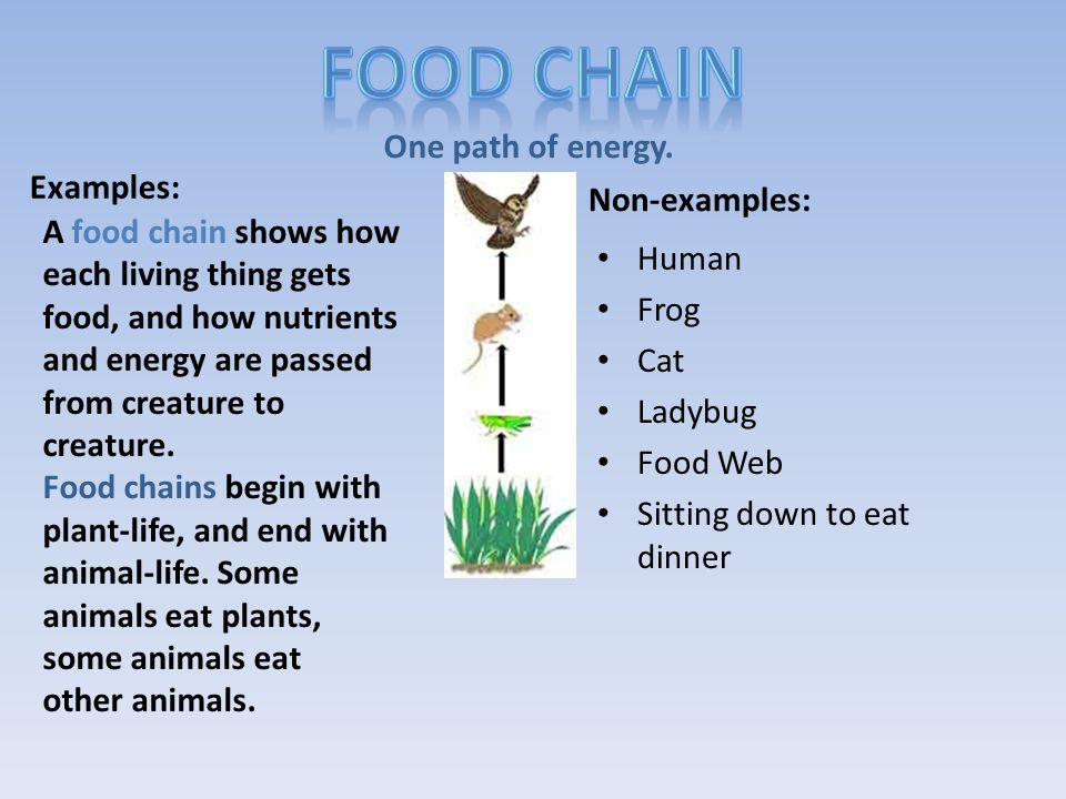 Vocabulary Mapping Food Web Definition 2 Non- examples 4 Examples Sentence Colored Picture