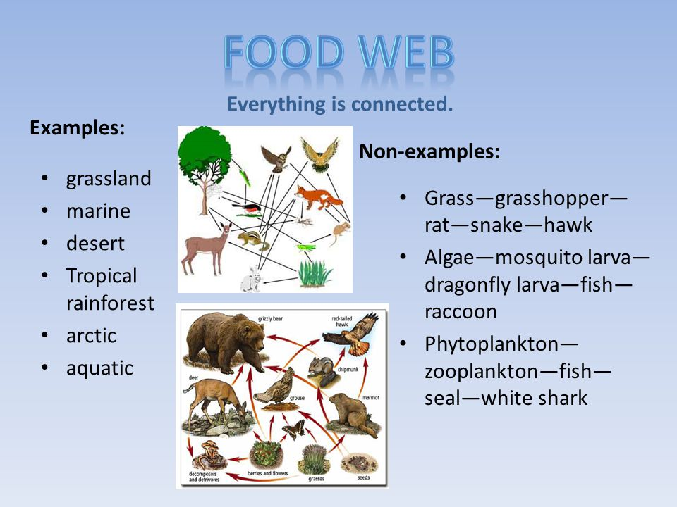 An organism that eats both plants and meat. omni- all or everything -vore: eater