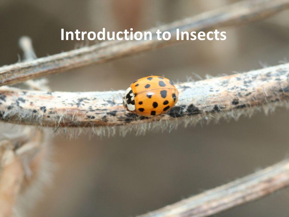 Insects eat everything Carnivore, animal matter Herbivore, plant matter Omnivore, plant and animal matter Detrivore, organic matter Saprophore, decaying matter