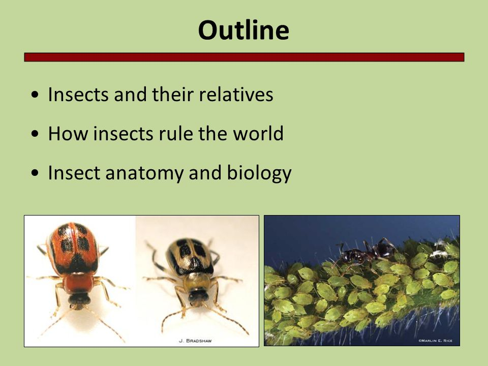 Outline Insects and their relatives How insects rule the world Insect anatomy and biology