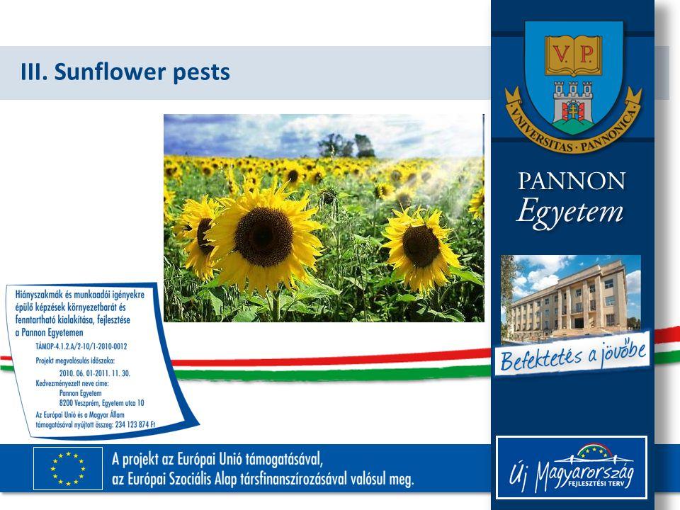 III. Sunflower pests