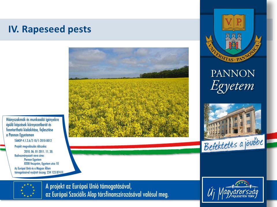 IV. Rapeseed pests