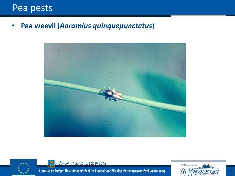 TÁMOP-4.1.2.A/2-10/1-2010-0012 Pea weevil (Aoromius quinquepunctatus) Pea pests234