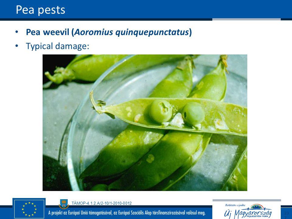 TÁMOP-4.1.2.A/2-10/1-2010-0012 Pea weevil (Aoromius quinquepunctatus) Typical damage: Pea pests237