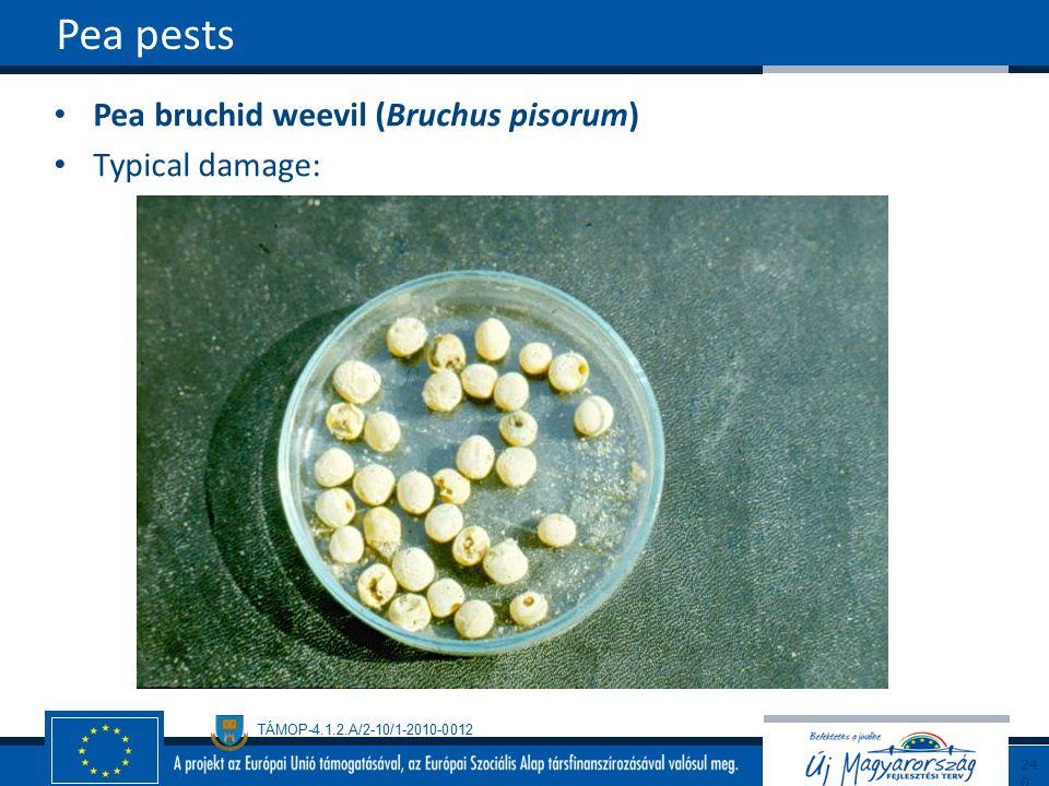 TÁMOP-4.1.2.A/2-10/1-2010-0012 Pea bruchid weevil (Bruchus pisorum) Typical damage: Pea pests240