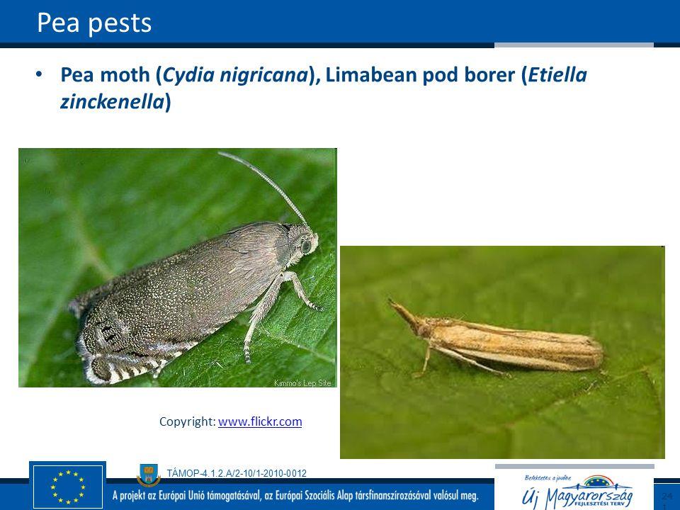 TÁMOP-4.1.2.A/2-10/1-2010-0012 Pea moth (Cydia nigricana), Limabean pod borer (Etiella zinckenella) Pea pests241 Copyright: www.flickr.comwww.flickr.com