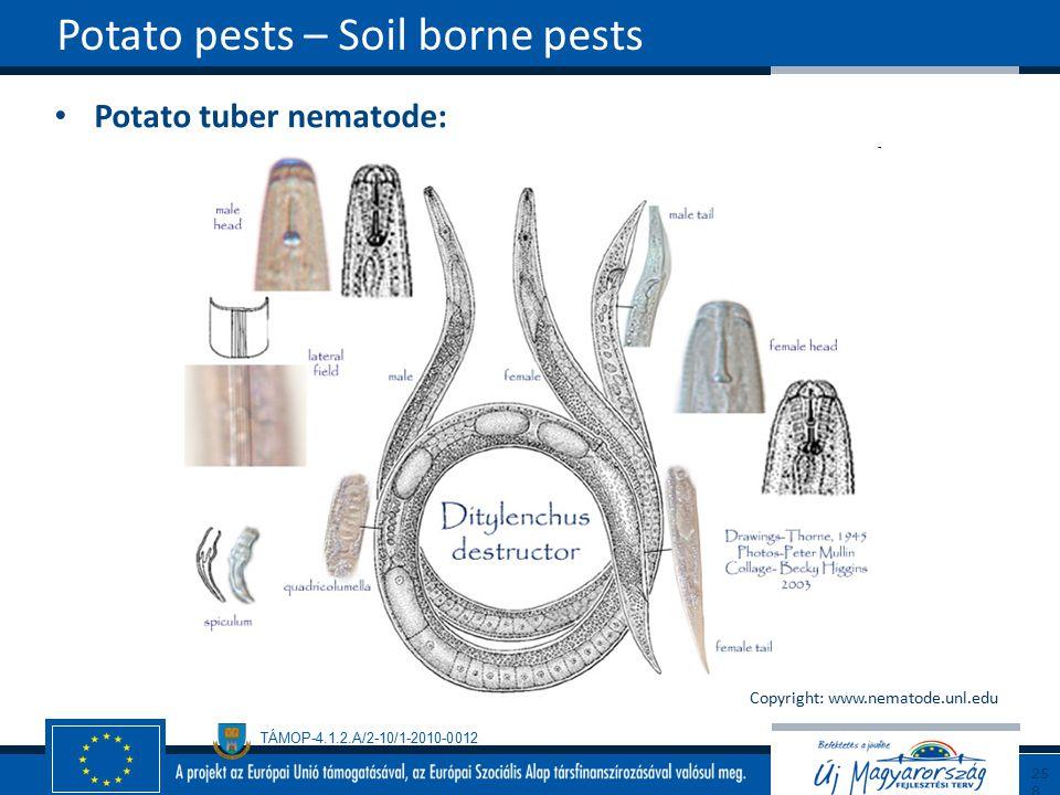 TÁMOP-4.1.2.A/2-10/1-2010-0012 Potato tuber nematode: Potato pests – Soil borne pests258 Copyright: www.nematode.unl.edu