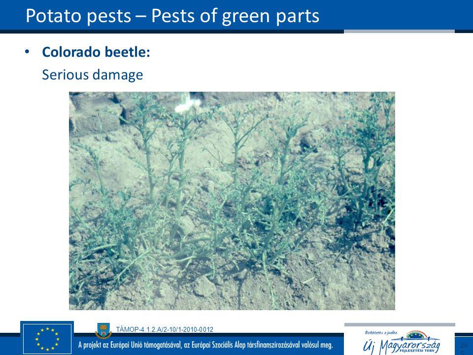 TÁMOP-4.1.2.A/2-10/1-2010-0012 Colorado beetle: Serious damage Potato pests – Pests of green parts265