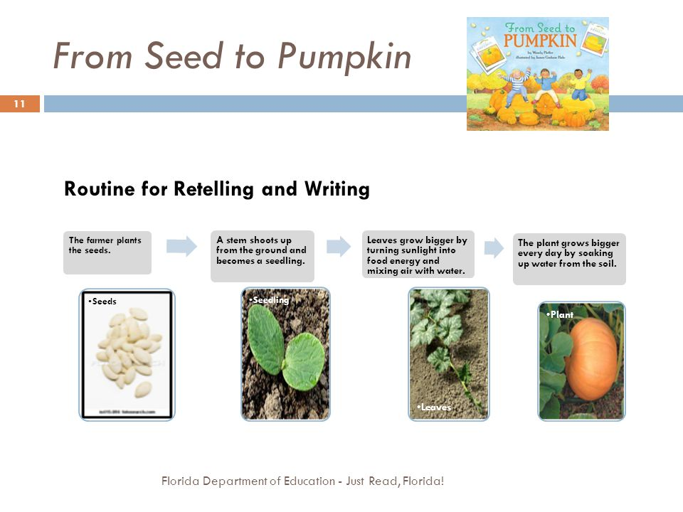 From Seed to Pumpkin Florida Department of Education - Just Read, Florida! 11 The farmer plants the seeds. Seeds A stem shoots up from the ground and
