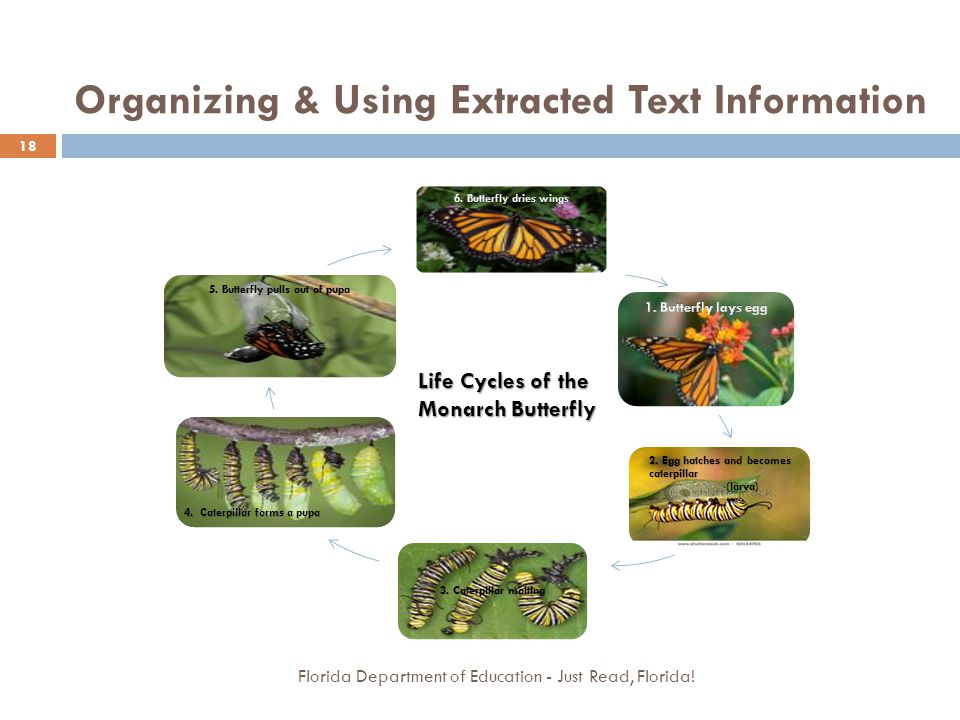 Organizing & Using Extracted Text Information Florida Department of Education - Just Read, Florida! 18 Life Cycles of the Monarch Butterfly