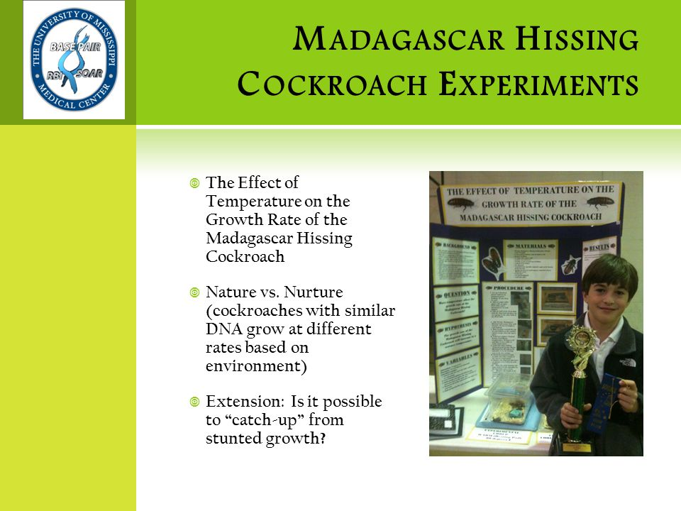 M ADAGASCAR H ISSING C OCKROACH E XPERIMENTS  The Effect of Temperature on the Growth Rate of the Madagascar Hissing Cockroach  Nature vs.