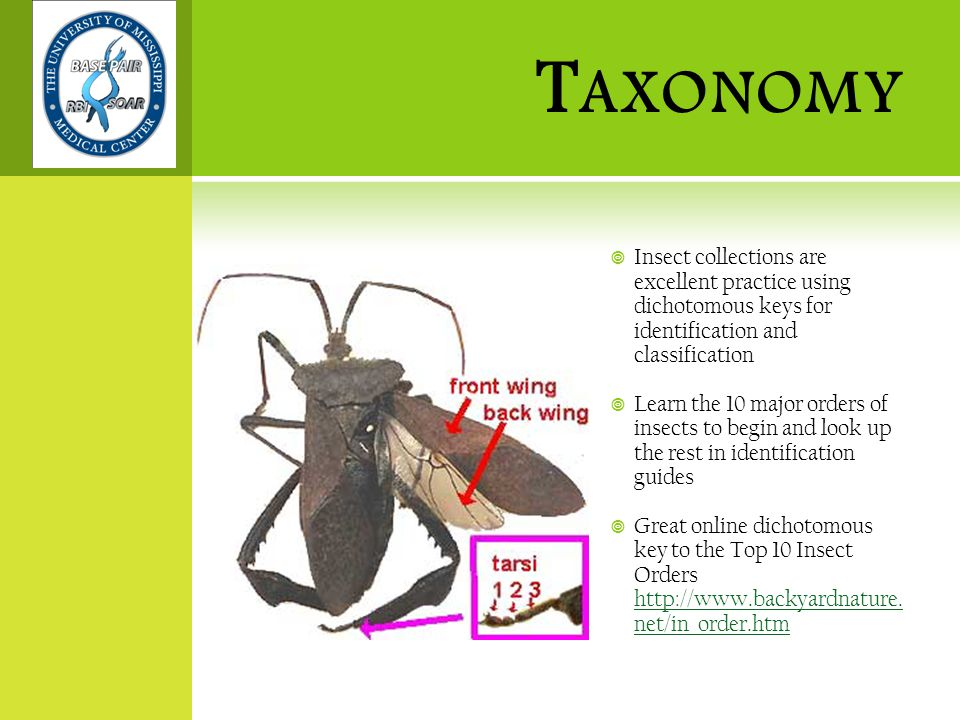 T AXONOMY  Insect collections are excellent practice using dichotomous keys for identification and classification  Learn the 10 major orders of insects to begin and look up the rest in identification guides  Great online dichotomous key to the Top 10 Insect Orders http://www.backyardnature.