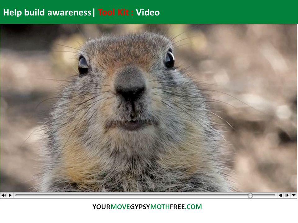 Help build awareness| Tool Kit : Video YOURMOVEGYPSYMOTHFREE.COM