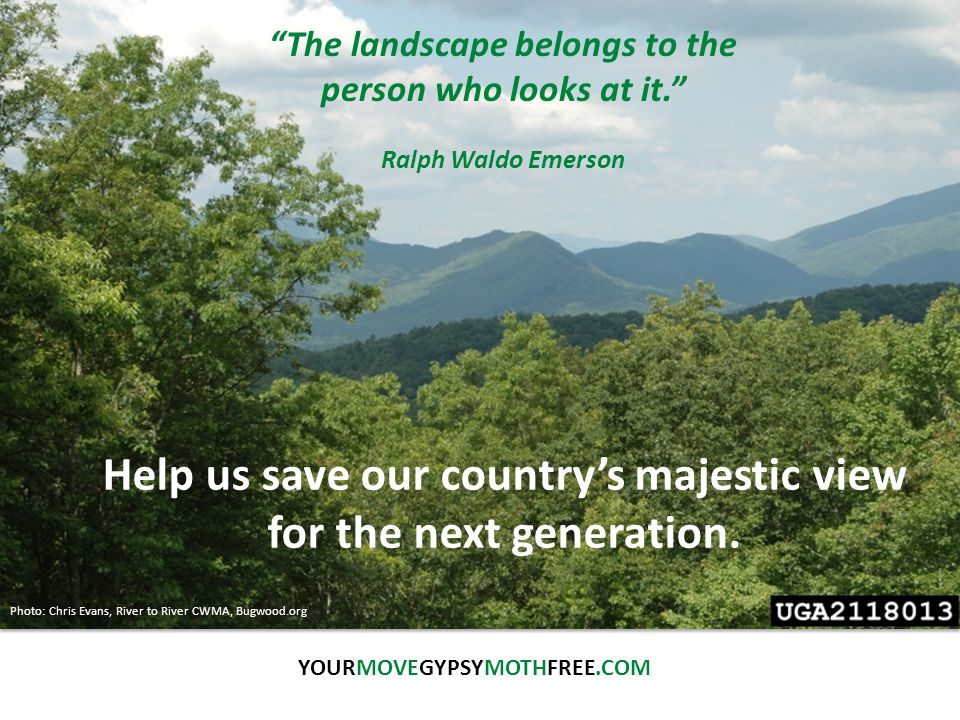 YOURMOVEGYPSYMOTHFREE.COM Photo: Dave Powell, USDA Forest Service, Bugwood.org The landscape belongs to the person who looks at it. Ralph Waldo Emerson Help us save our country's majestic view for the next generation.