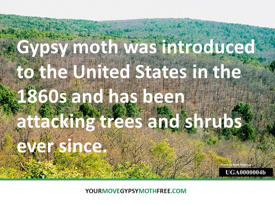 The Spread   How humans facilitate the problem Human-caused movement is the greatest contribution to the spread of gypsy moth.