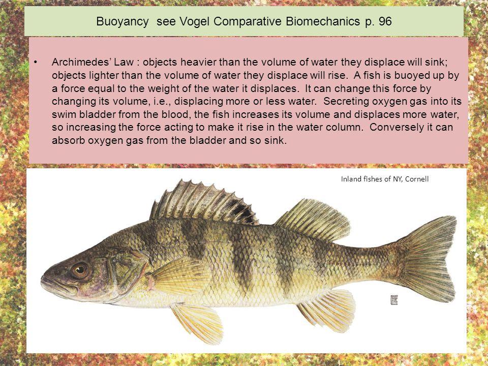 Buoyancy see Vogel Comparative Biomechanics p.