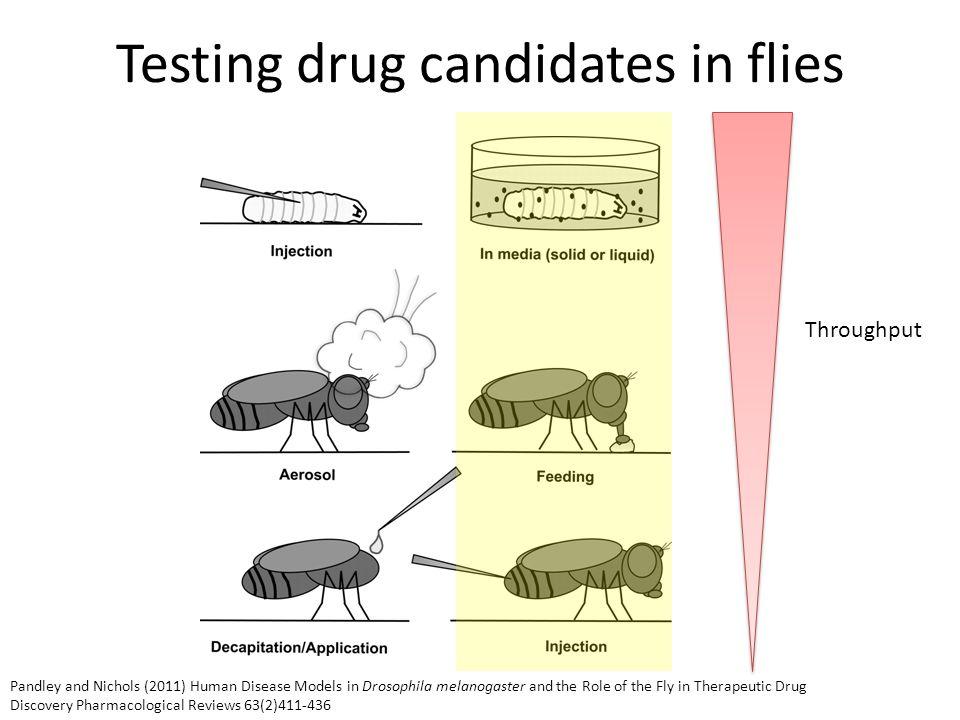 High throughput screening dsRNA library covering 96% of the Drosophila genome High Throughput screening