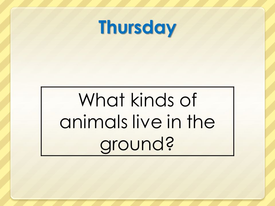 Thursday What kinds of animals live in the ground?