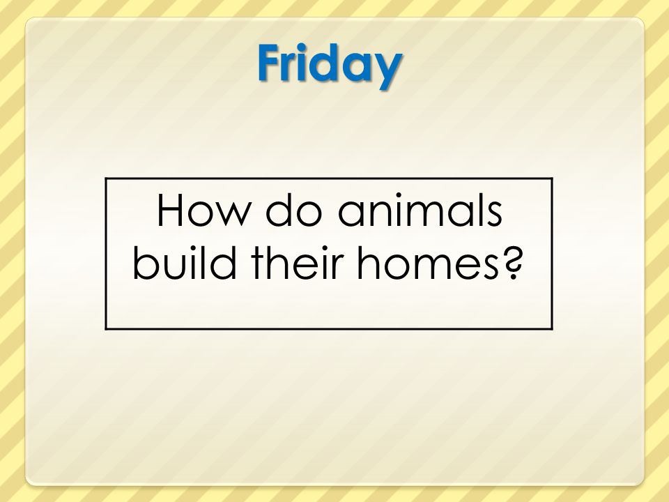 Friday How do animals build their homes?