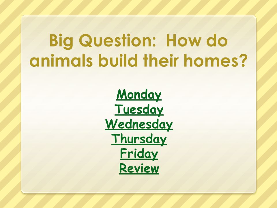 Big Question: How do animals build their homes? Monday Tuesday Wednesday Thursday Friday Review
