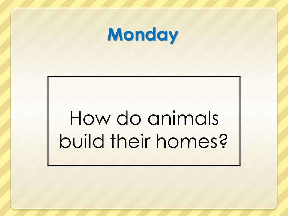 Monday How do animals build their homes?