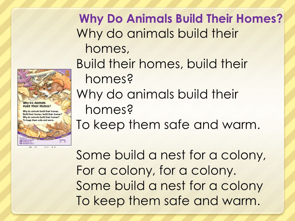 Why Do Animals Build Their Homes? Why do animals build their homes, Build their homes, build their homes? Why do animals build their homes? To keep th