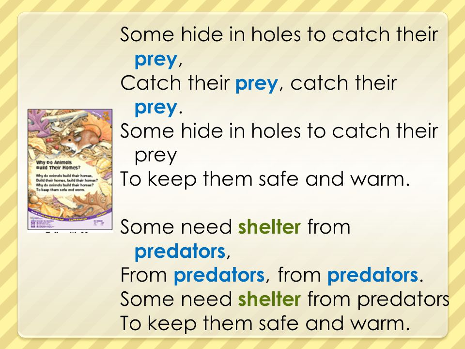 Some hide in holes to catch their prey, Catch their prey, catch their prey. Some hide in holes to catch their prey To keep them safe and warm. Some ne