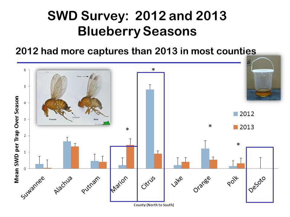 SWD Survey: 2012 and 2013 Blueberry Seasons 2012 had more captures than 2013 in most counties