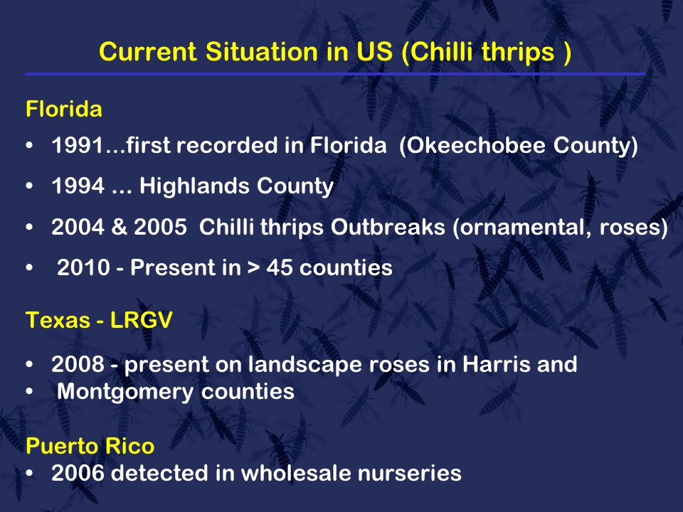 Current Situation in US (Chilli thrips ) Florida 1991...first recorded in Florida (Okeechobee County) 1994 … Highlands County 2004 & 2005 Chilli thrips Outbreaks (ornamental, roses) 2010 - Present in > 45 counties Texas - LRGV 2008 - present on landscape roses in Harris and Montgomery counties Puerto Rico 2006 detected in wholesale nurseries