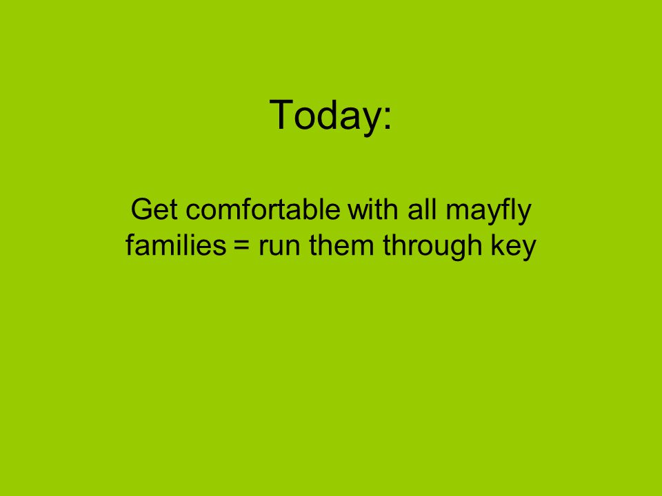 Today: Get comfortable with all mayfly families = run them through key
