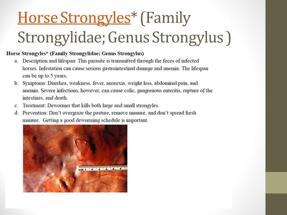 Horse StrongylesHorse Strongyles* (Family Strongylidae; Genus Strongylus )