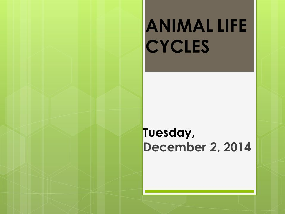 ANIMAL LIFE CYCLES Tuesday, December 2, 2014