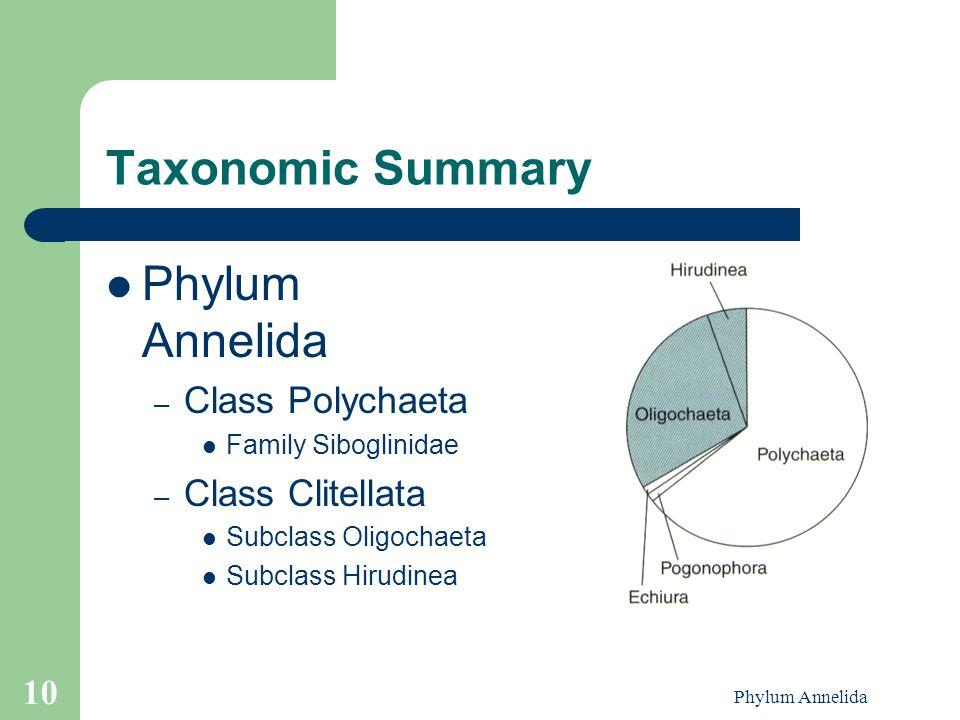 Phylum Annelida 10 Taxonomic Summary Phylum Annelida – Class Polychaeta Family Siboglinidae – Class Clitellata Subclass Oligochaeta Subclass Hirudinea