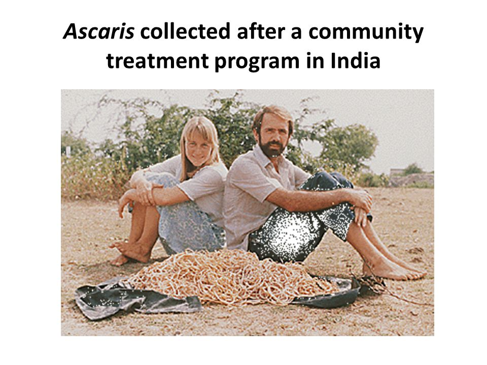 Ascaris collected after a community treatment program in India
