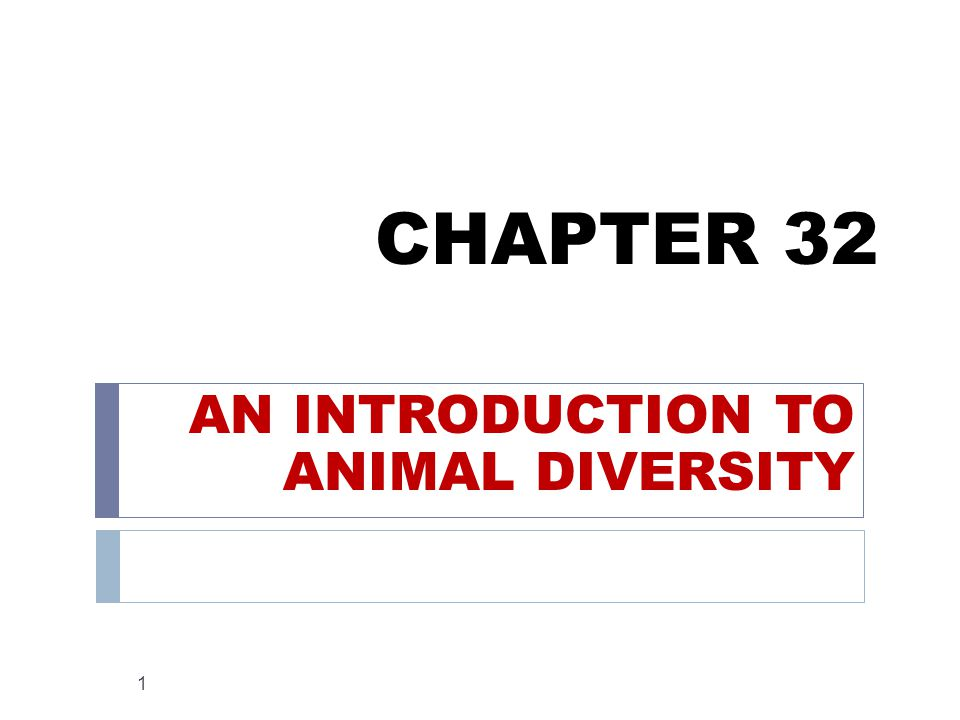 CHAPTER 32 AN INTRODUCTION TO ANIMAL DIVERSITY 1