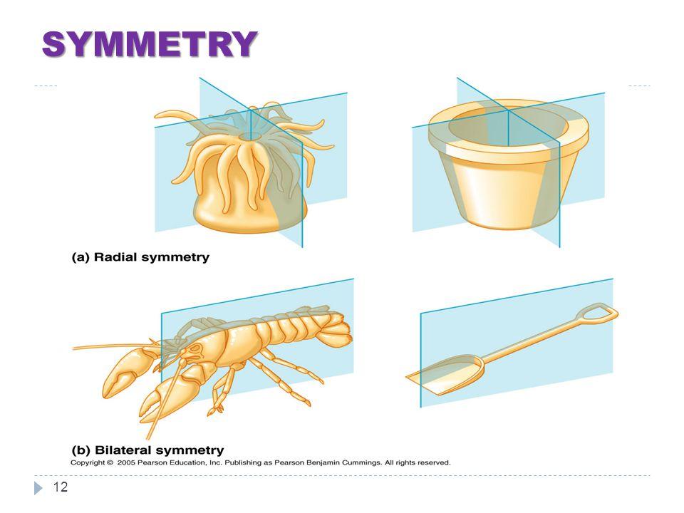 SYMMETRY 12