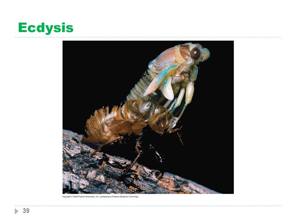 Ecdysis 39