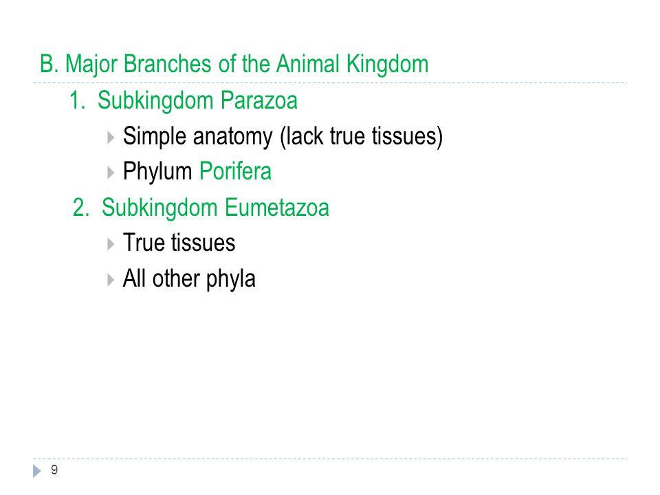 9 B.Major Branches of the Animal Kingdom 1.