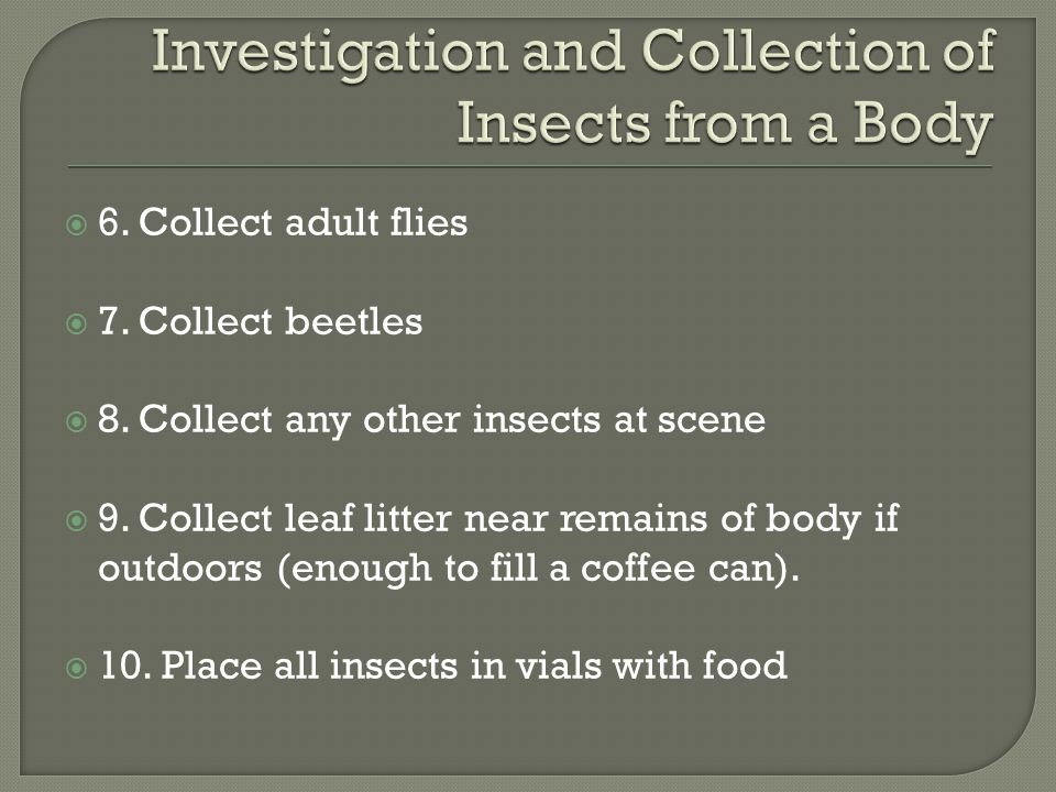  6. Collect adult flies  7. Collect beetles  8. Collect any other insects at scene  9. Collect leaf litter near remains of body if outdoors (enoug
