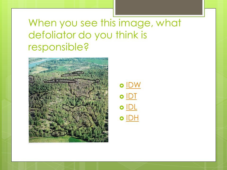 When you see this image, what defoliator do you think is responsible.