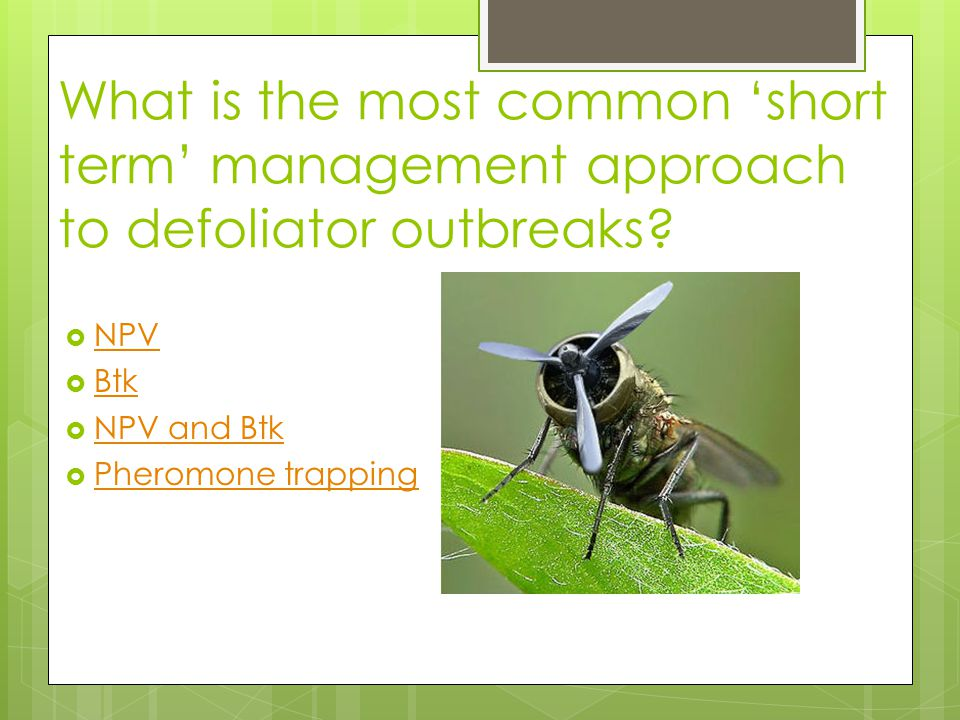 What is the most common 'short term' management approach to defoliator outbreaks.