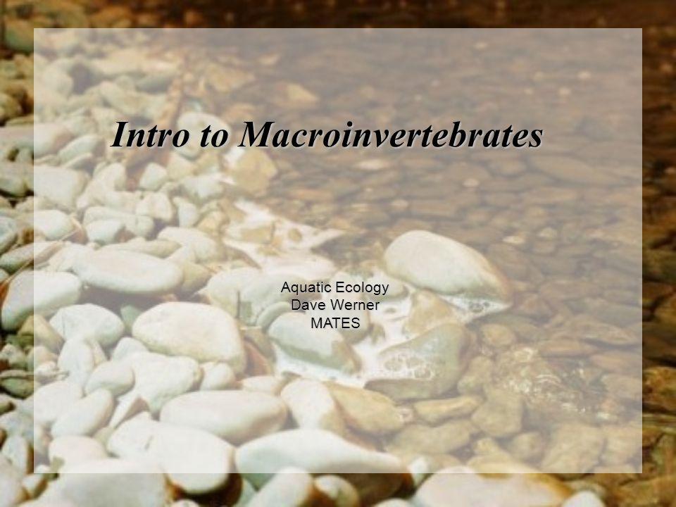 Intro to Macroinvertebrates Aquatic Ecology Dave Werner MATES