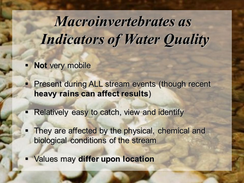 Macroinvertebrates as Indicators of Water Quality  Not very mobile  Present during ALL stream events (though recent heavy rains can affect results)  Relatively easy to catch, view and identify  They are affected by the physical, chemical and biological conditions of the stream  Values may differ upon location