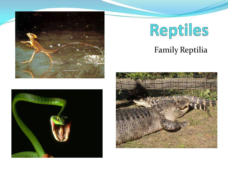 Family Reptilia