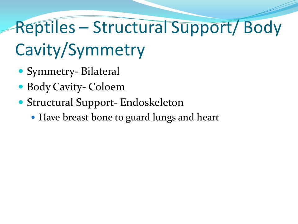 Reptiles – Structural Support/ Body Cavity/Symmetry Symmetry- Bilateral Body Cavity- Coloem Structural Support- Endoskeleton Have breast bone to guard