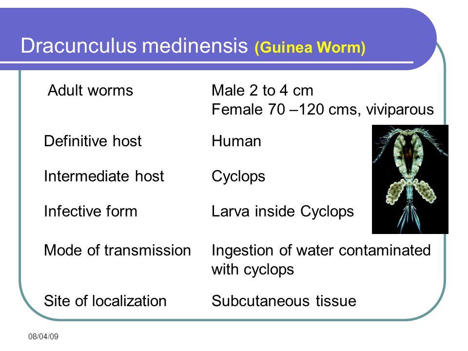 08/04/09 Dracunculus medinensis Adult wormsMale 2 to 4 cm Female 70 –120 cms, viviparous Infective formLarva inside Cyclops Mode of transmissionIngest