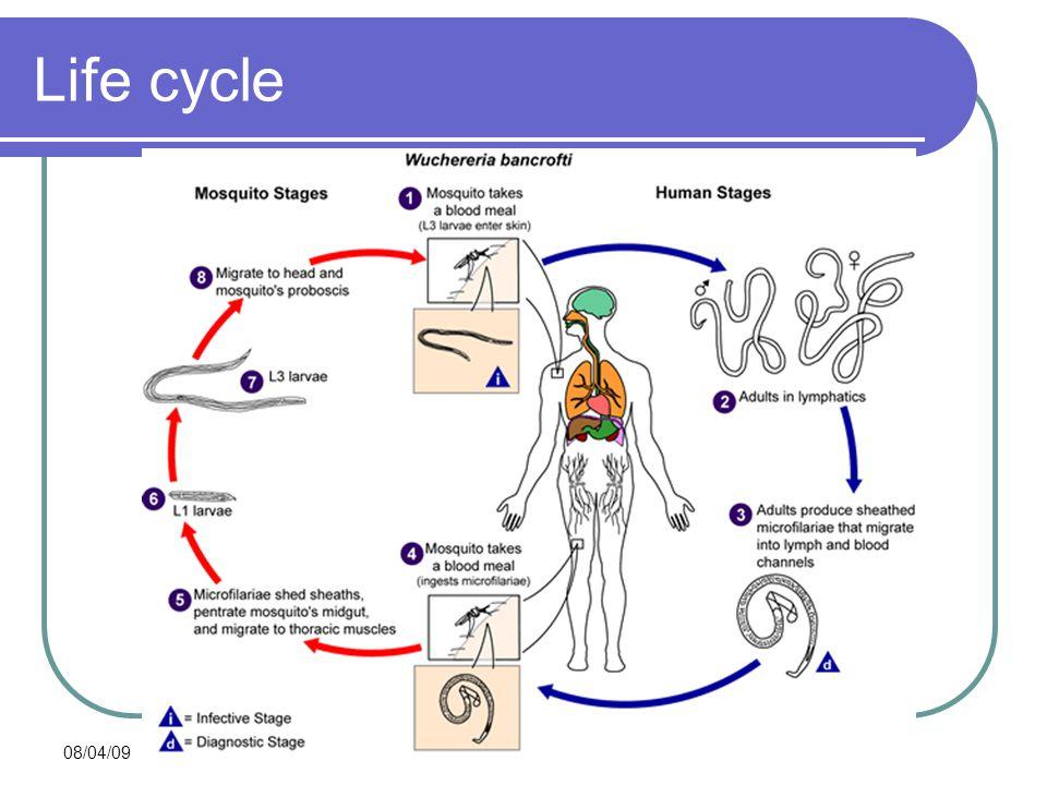 08/04/09 Life cycle
